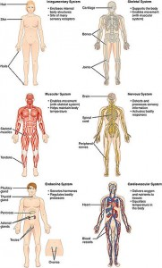 Organ Systems I